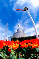 Tulips, Independence Temple